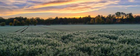 Приобретение сельскохозяйственной земли в Болгарии