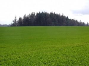 сельскохозяйственной земли